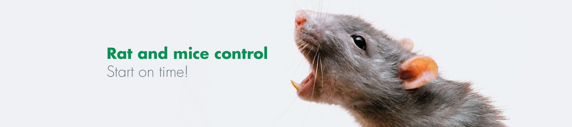 Rat and mice control